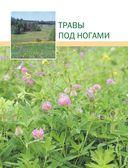 Лекарственные растения. Большая иллюстрированная энциклопедия — фото, картинка — 13