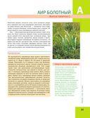 Лекарственные растения. Большая иллюстрированная энциклопедия — фото, картинка — 15