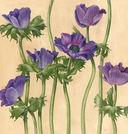 Ботанические портреты. Практическое руководство по рисованию акварелью — фото, картинка — 4